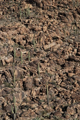 Boulders and Saguaro on Rich Hill